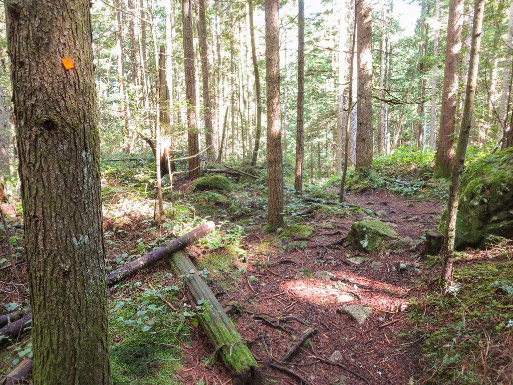 DV Trail