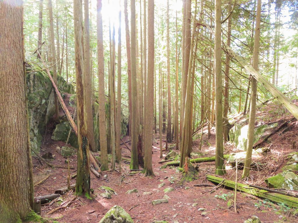 DV Trail 3