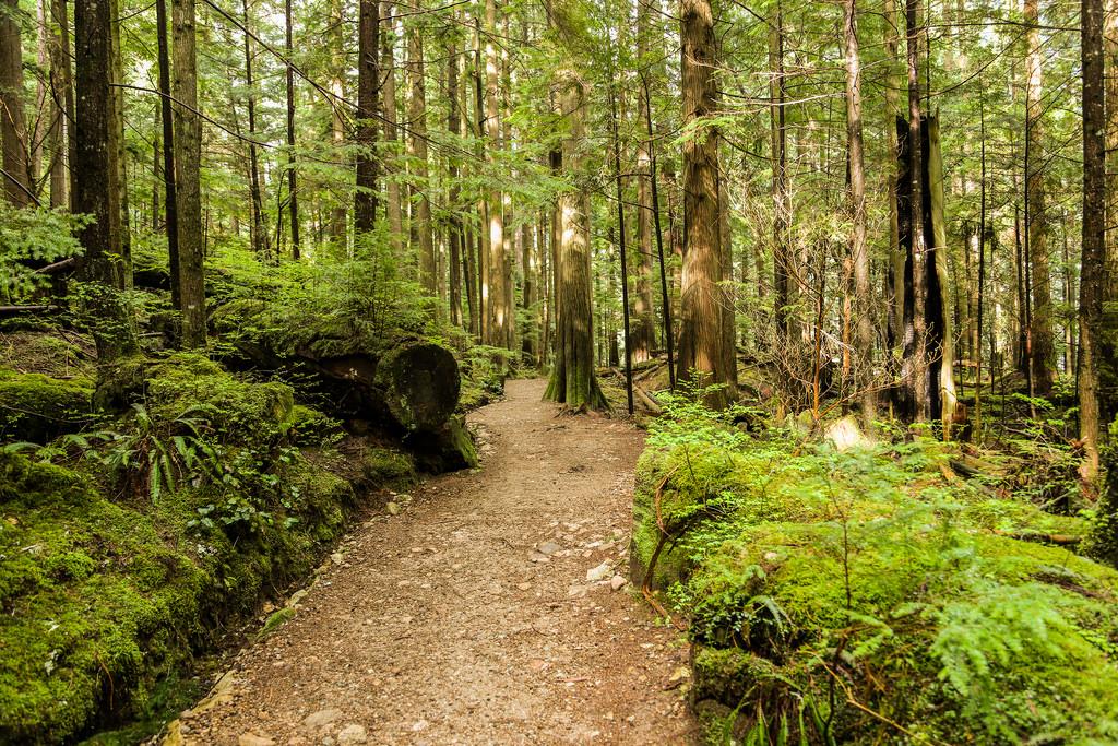 BL Trail 2