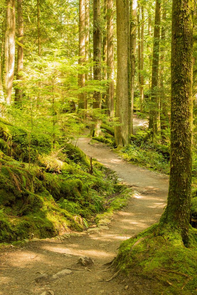 BL Trail