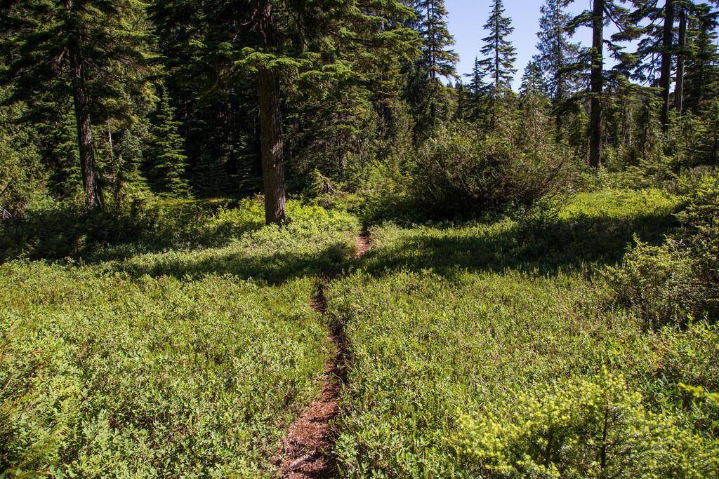 Lindsay Lake Trail 3