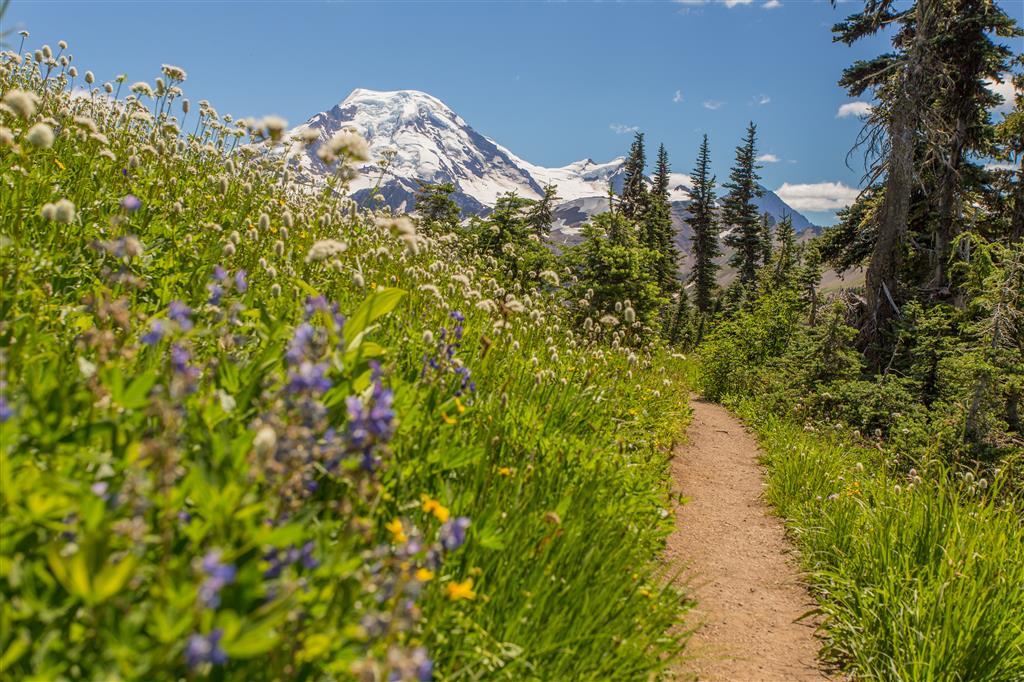 Mt. Baker through the flowers