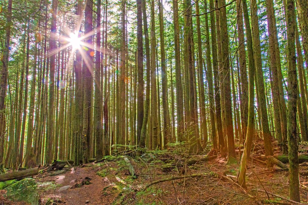 Sun fighting through trees