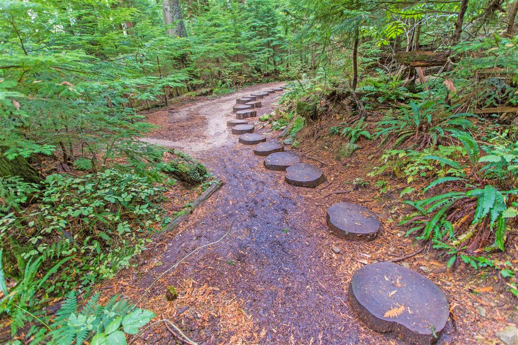 Wooden Stumps on trail