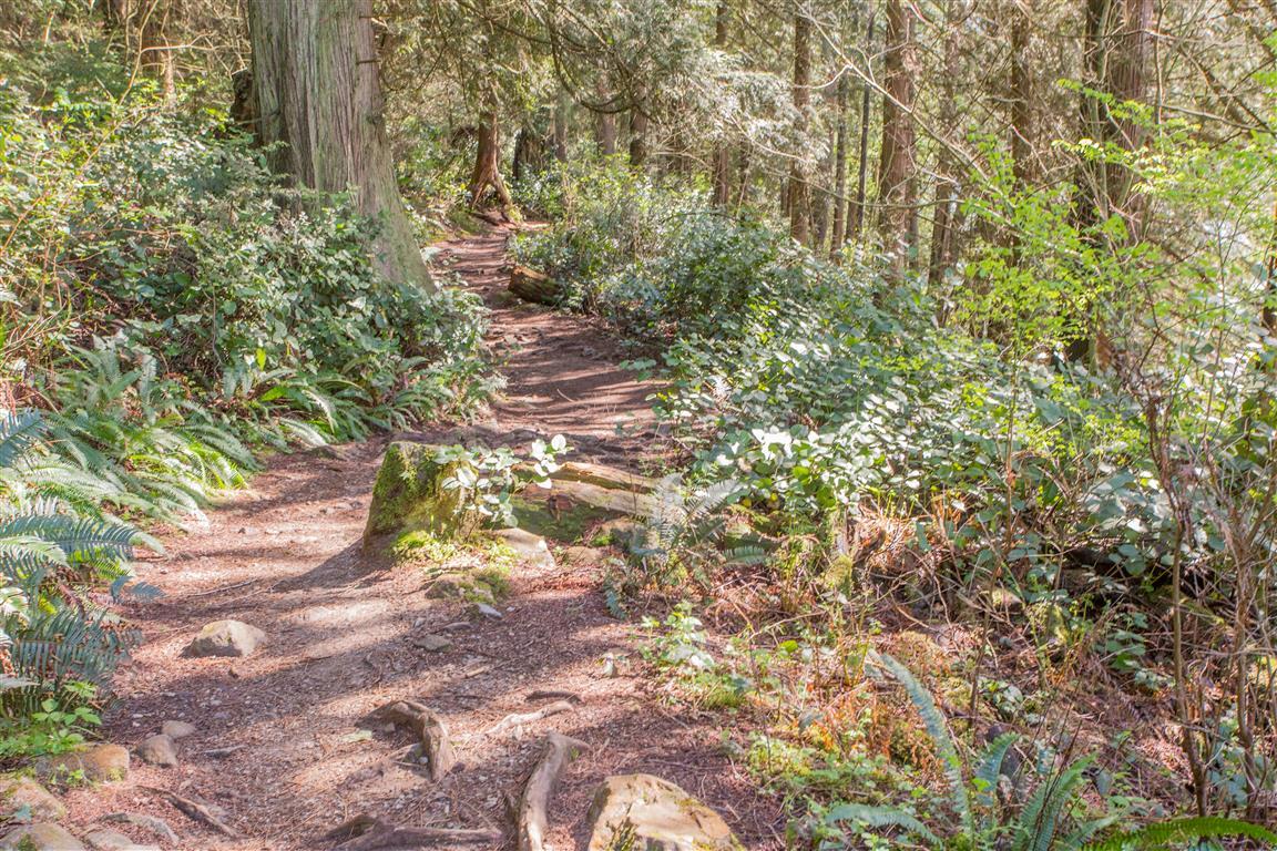 Trail picture