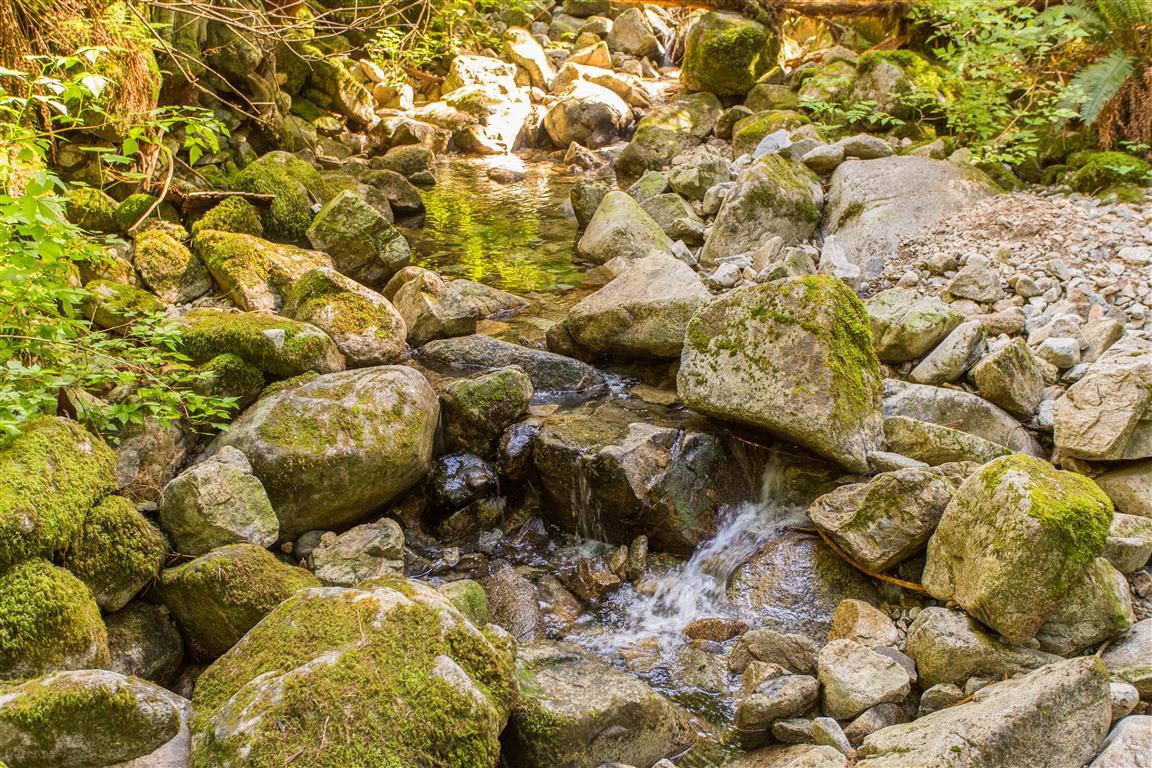 Nelson Creek