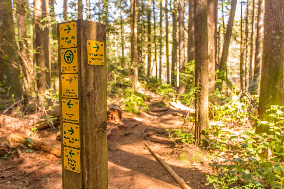 Trail pic2