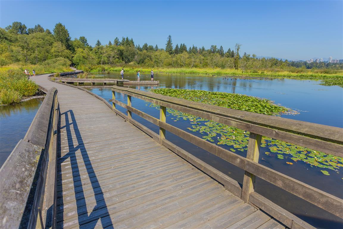 Burnaby Lake at Piper Spit