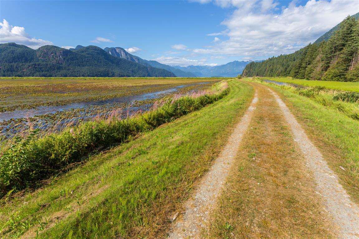 Dyke in Marsh