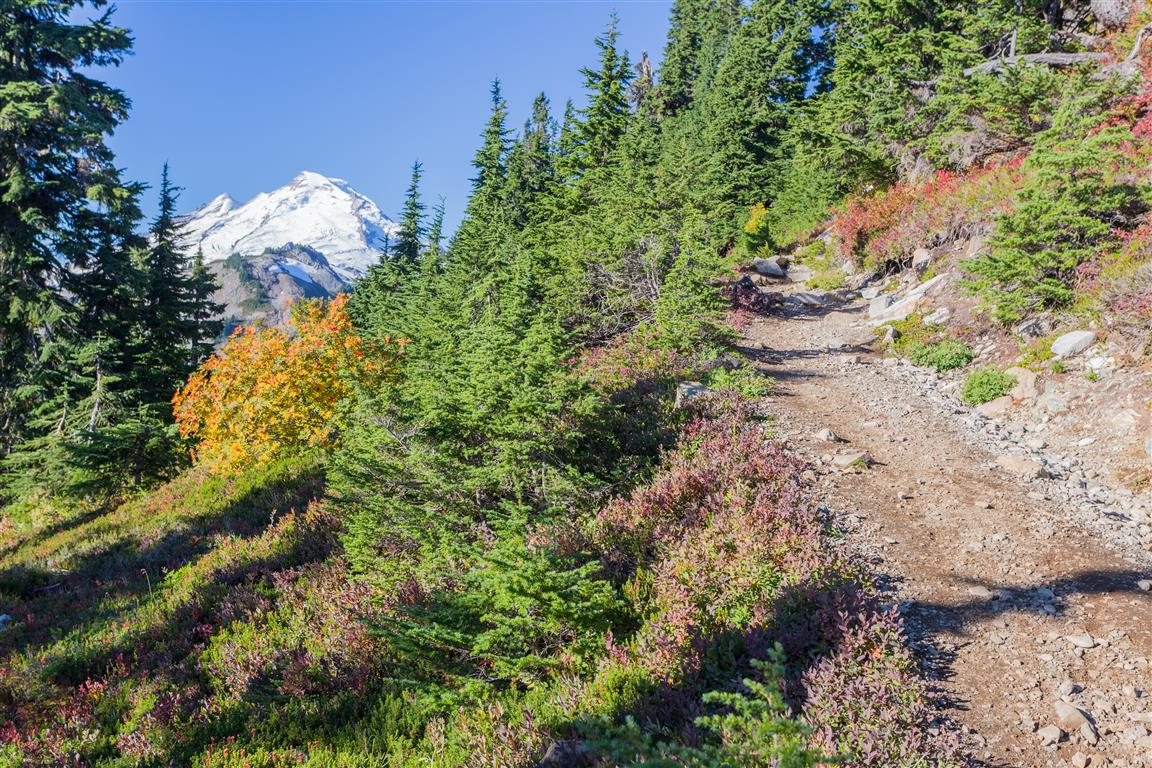 Mt. Baker on trail