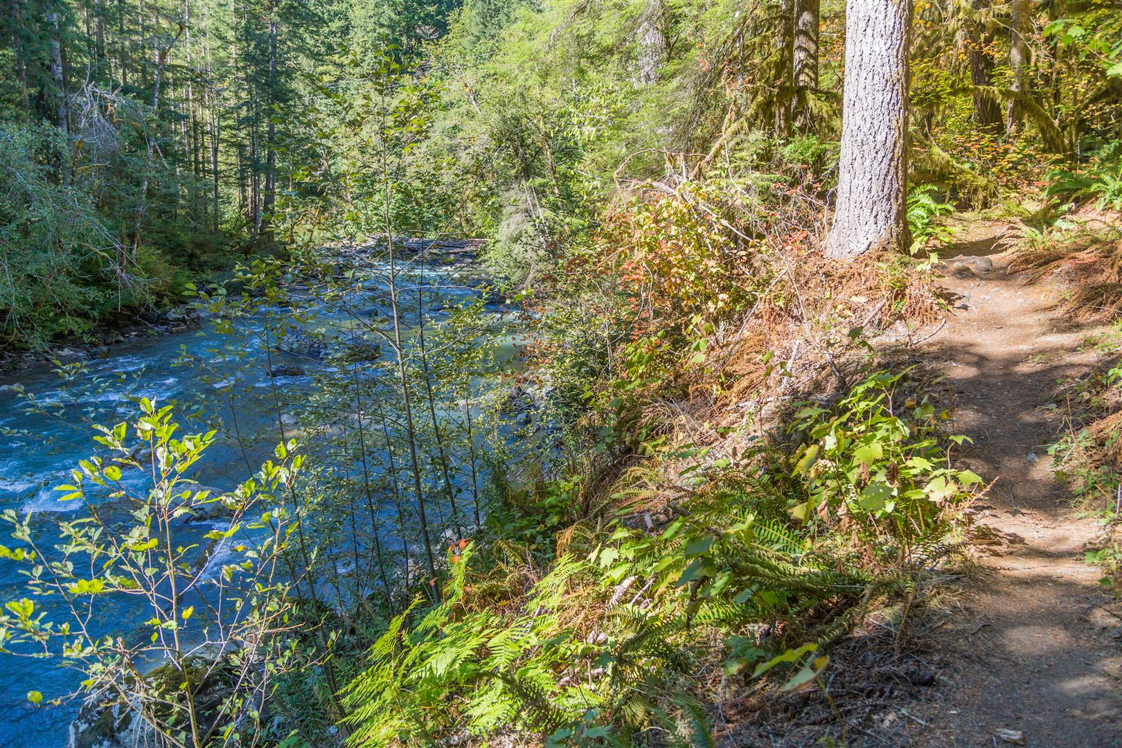 Nooksack River and trail
