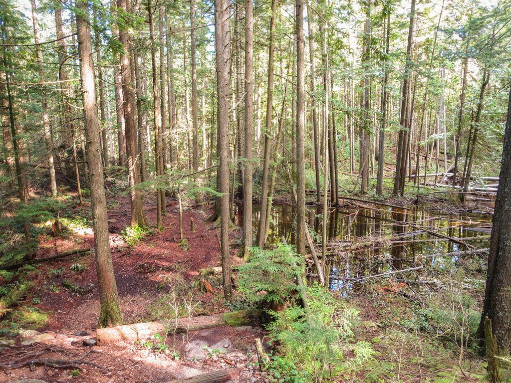 DV Trail 4