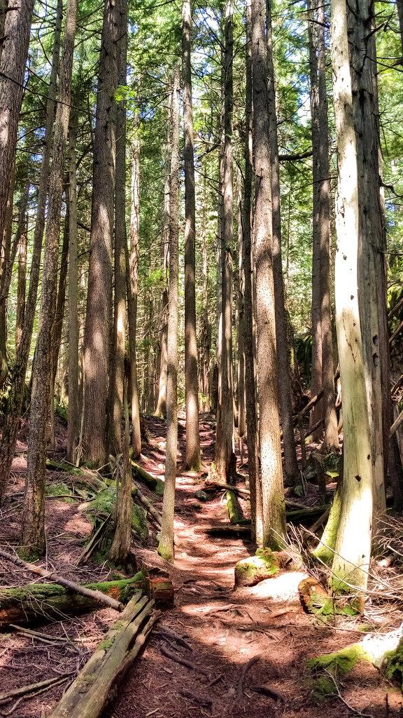 DV Trail 2