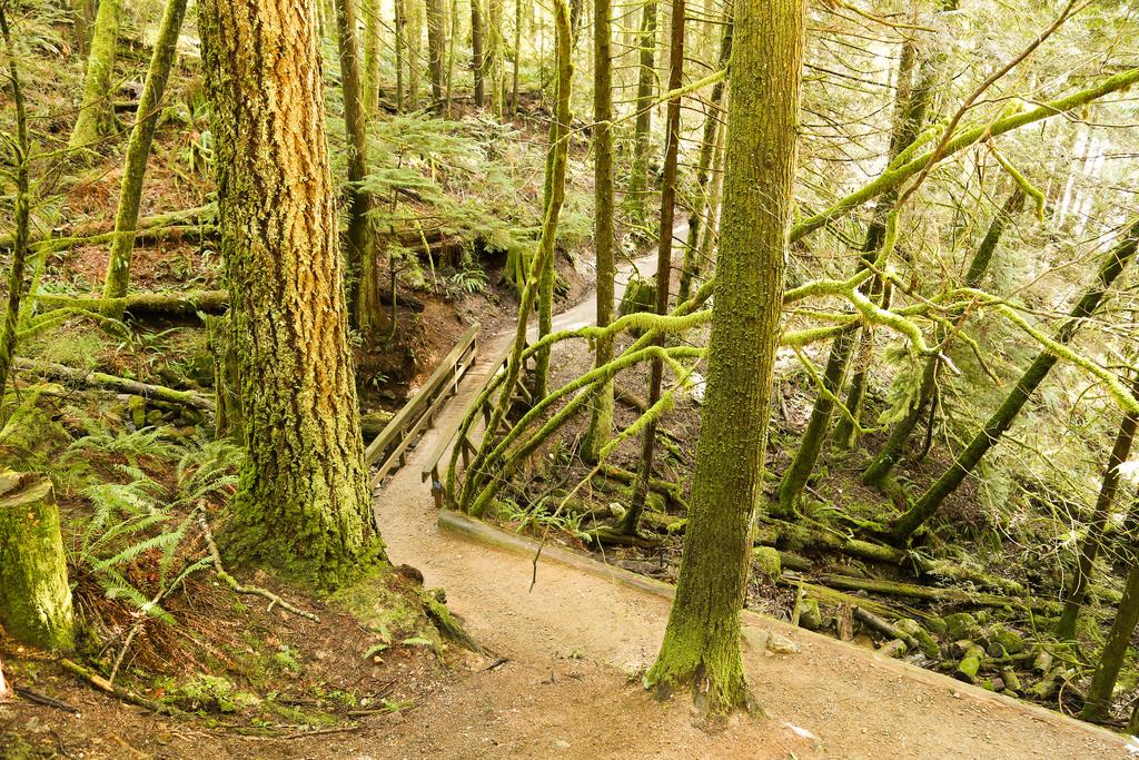 BL Trail 3