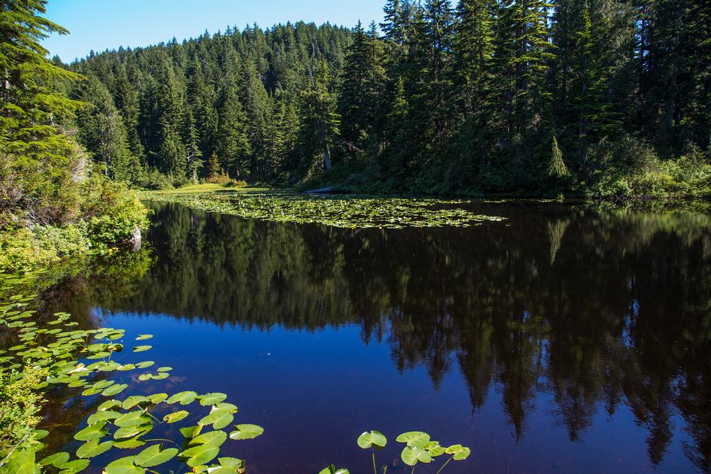 Chickadee Lake