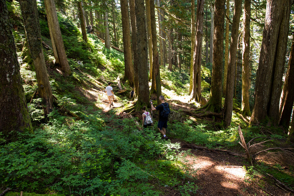 Lindsay Lake Trail 2