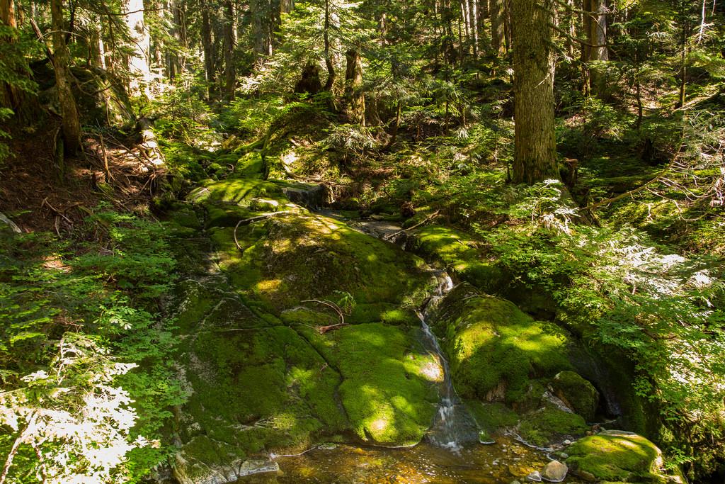 Nancycatch Creek