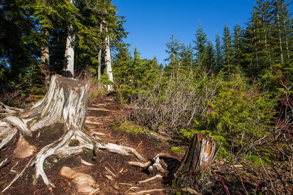 Lindsay Lake Trail