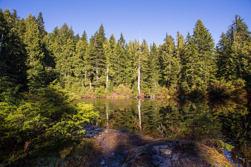 Siskin Lake