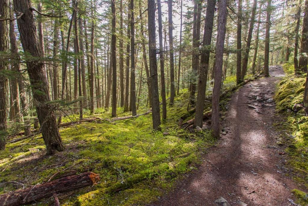 Trail pic (2)