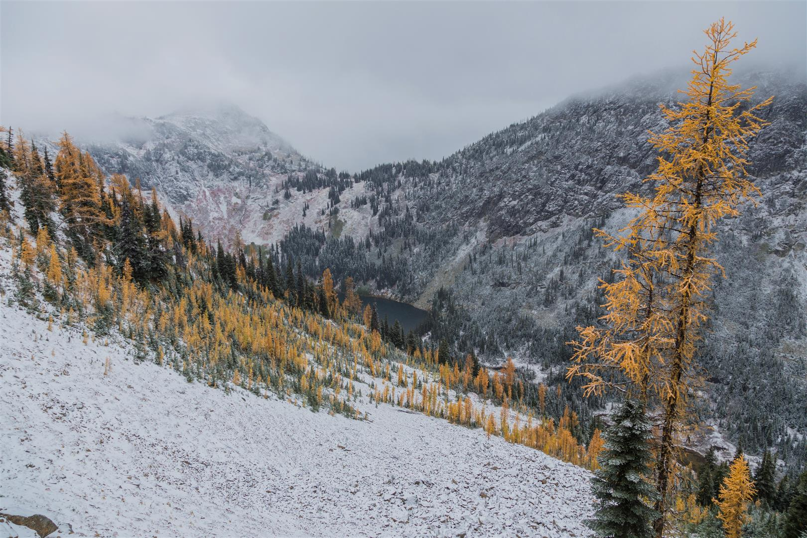 Gorgeous Golden Alpine Larches