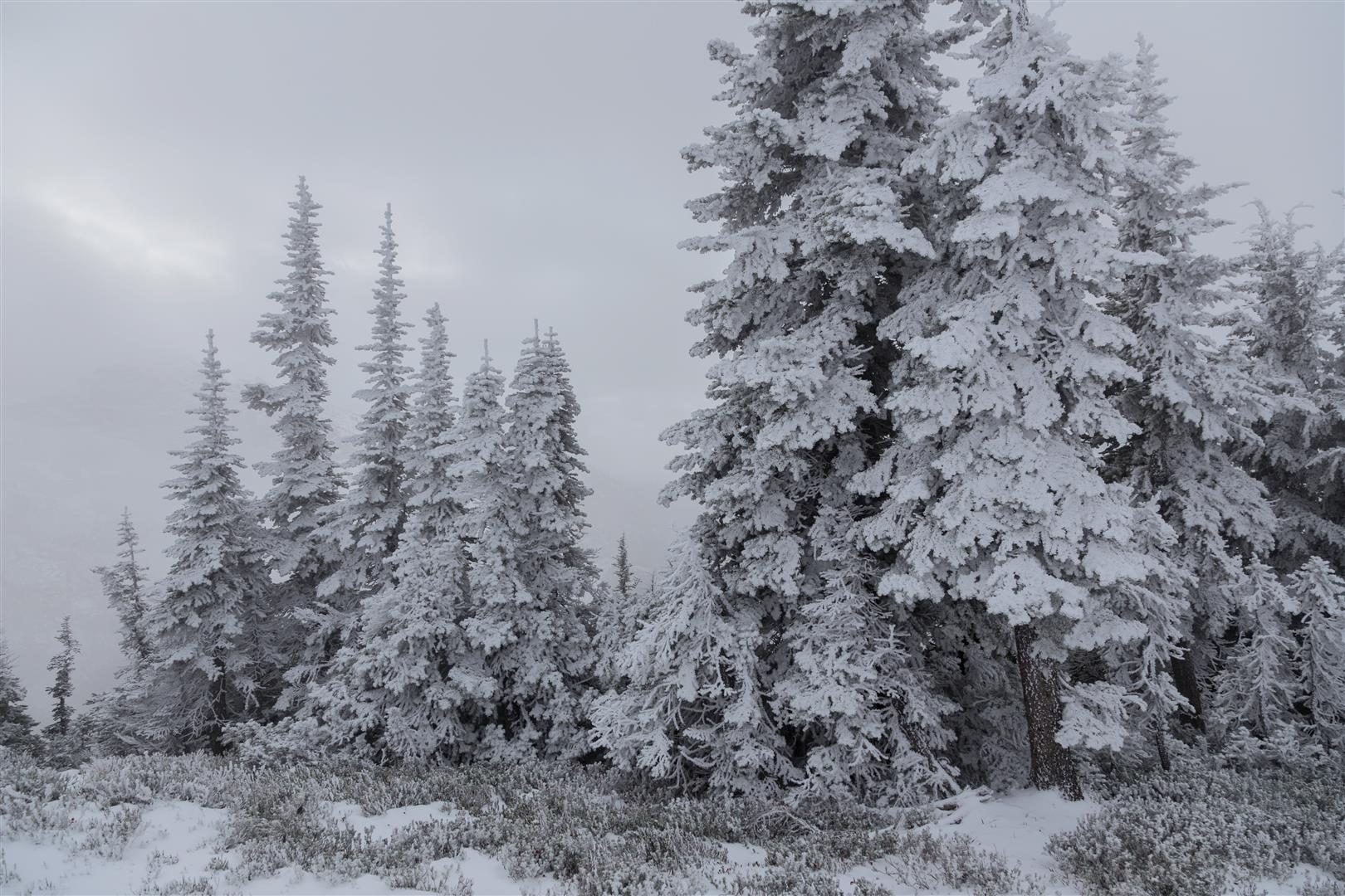 Snow-covered trees at the summit