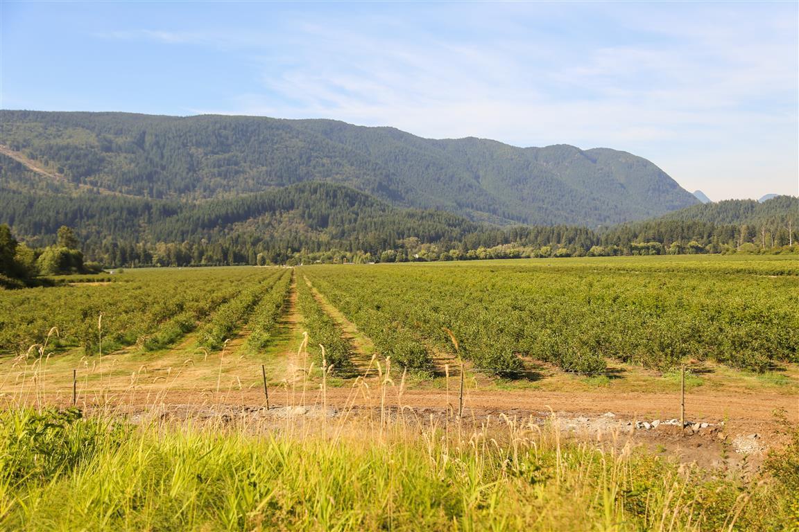 Blueberry Fields
