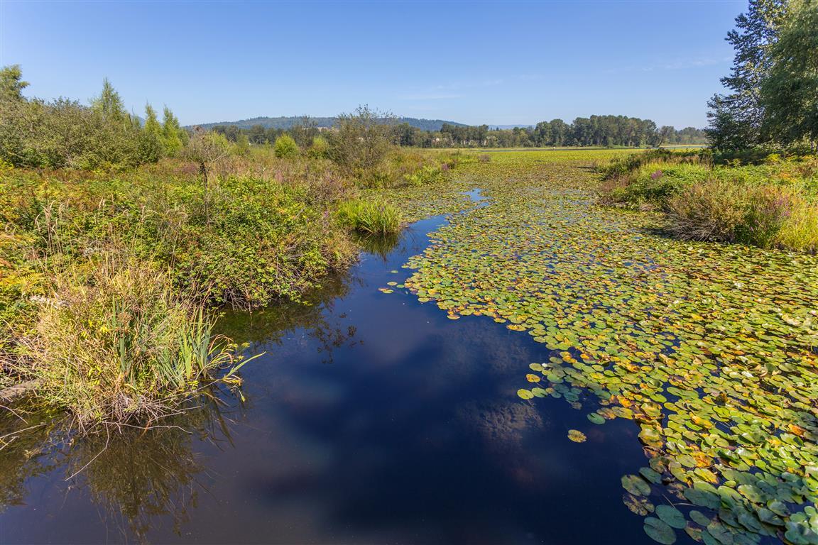 Deer Lake Brook