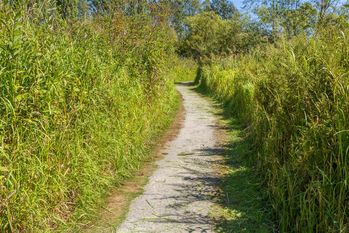Trail bounded by high grass