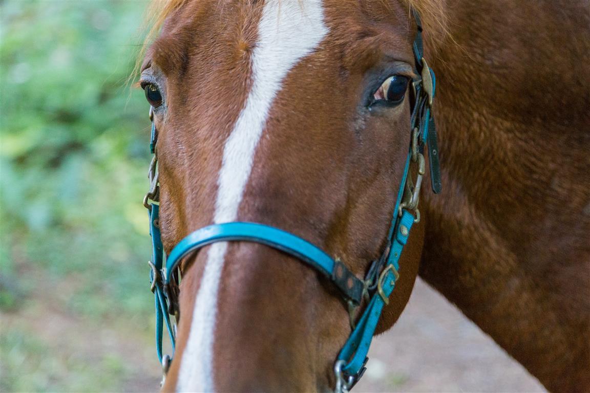 Horse at Lizard Lake